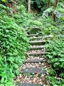 每年必會山岳之天上山:20140413賞桐步道天上山9