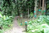 南投縣---鹿谷鄉:溪頭探索森林5