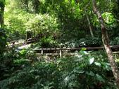 新北市---烏來區:內洞國家森林遊樂區18