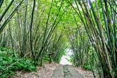 台北市---士林區:內雙溪樹木標本園9