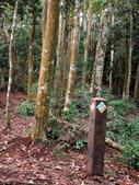 台中市---和平區:橫嶺山自然步道(木馬古道)17