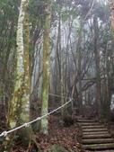 台中市---和平區:橫嶺山自然步道(木馬古道)18