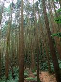 台中市---和平區:橫嶺山自然步道(木馬古道)20