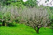 台北市---士林區:內雙溪樹木標本園12