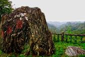 新竹縣---寶山鄉:雞油凸觀景台&老榕