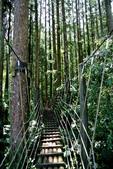 南投縣---鹿谷鄉:溪頭探索森林1
