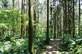 南投縣---鹿谷鄉:溪頭探索森林4