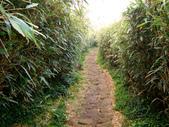 每年必會山岳之七星山系步道:20110408七星山主峰43