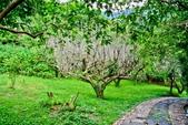 台北市---士林區:內雙溪樹木標本園10