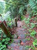 每年必會山岳之天上山:20140413賞桐步道天上山29