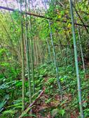 新竹縣---五峰鄉:麥巴萊古道1K版6