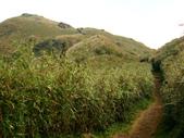 每年必會山岳之七星山系步道:20110408七星山主峰23