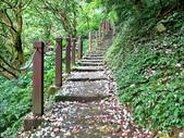 每年必會山岳之天上山:20140413賞桐步道天上山2