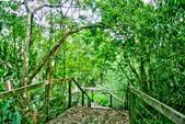 台北市---士林區:內雙溪樹木標本園5