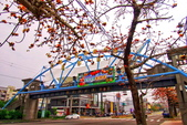 台中市---東勢區:2015東關路木棉花盛開12