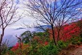 三峽賞櫻超級秘境B區:2015霧裡看花花還是花40