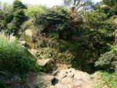 每年必會山岳之七星山系步道:20110408七星山主峰22