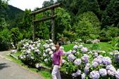 南投縣---竹山鎮:杉林溪藥花園繡球花季17