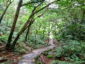 每年必會山岳之天上山:20140413賞桐步道天上山37