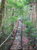台中市---和平區:橫嶺山自然步道(木馬古道)14