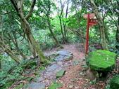 每年必會山岳之天上山:20140413賞桐步道天上山34