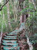 台中市---和平區:橫嶺山自然步道(木馬古道)15