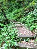每年必會山岳之天上山:20140413賞桐步道天上山8