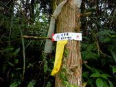 新竹縣---橫山鄉:外比來山區秘境亂闖34