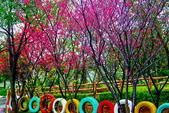 桃園市---楊梅區:秀才埤公園