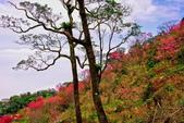 三峽賞櫻超級秘境B區:2015霧裡看花花還是花129