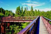 嘉義縣---阿里山鄉:阿里山森林遊樂區櫻之道(天空步道)