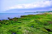 新北市---石門區:老梅綠藻礁23