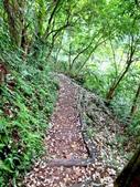 每年必會山岳之天上山:20140413賞桐步道天上山13