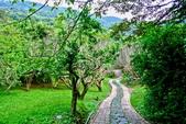 台北市---士林區:內雙溪樹木標本園11