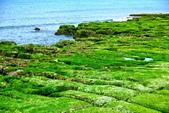新北市---石門區:老梅綠藻礁25