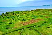 新北市---石門區:老梅綠藻礁29