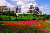 古亭河濱公園花海:2015心形花海暨順遊河濱公園20