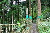 南投縣---鹿谷鄉:溪頭探索森林6