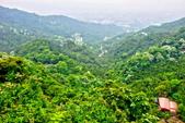 每年必會山岳之天上山:20140413賞桐步道天上山19