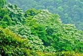 每年必會山岳之天上山:20140413賞桐步道天上山20