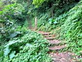 每年必會山岳之天上山:20140413賞桐步道天上山6