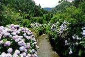 南投縣---竹山鎮:杉林溪藥花園繡球花季2