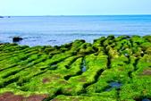 新北市---石門區:老梅綠藻礁31