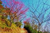 苗栗縣---大湖鄉:薑麻園聖衡宮步道10