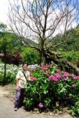 南投縣---竹山鎮:杉林溪藥花園繡球花季15