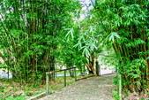 台北市---士林區:內雙溪樹木標本園3