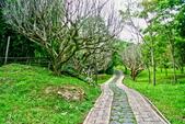 台北市---士林區:內雙溪樹木標本園4