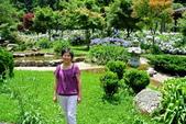 南投縣---竹山鎮:杉林溪藥花園繡球花季6