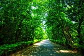 桃園市---新屋區:永安綠色隧道