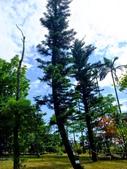 宜蘭縣---冬山鄉:仁山植物園台式庭園展示區9